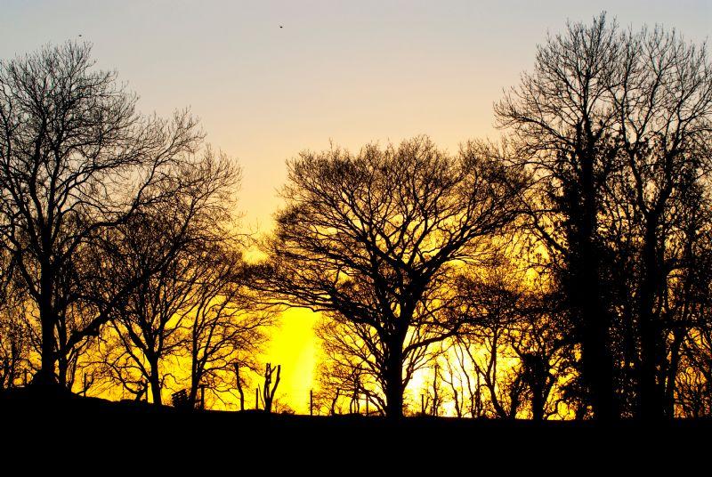 Evening sunlight on Monree Road